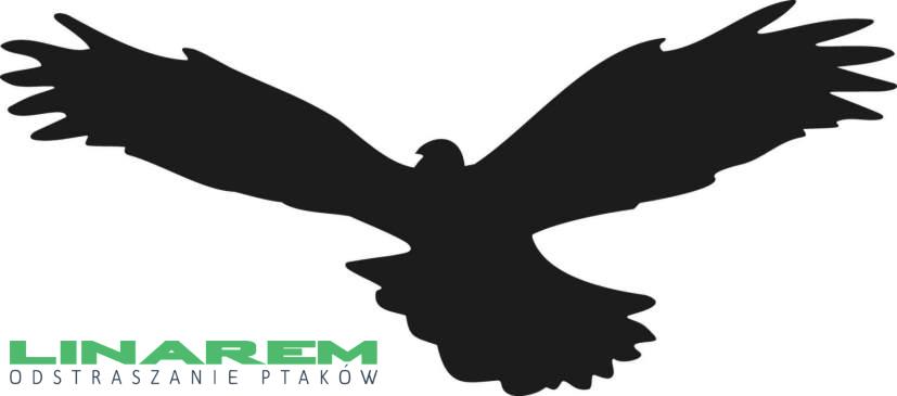 Naklejka Ptaka Drapieżnego Naklejka Na Szybę Sylwetka Ptaka Wzór