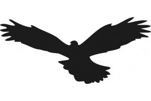 Wizualne Odstraszacze Ptaków Skleplinarempl