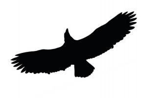 Odstraszacze Na Ptaki Sylwetka Ptaka Drapieżnego Naklejka Ptaka